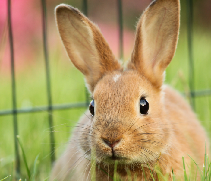 Your Comprehensive Guide to Cruelty-Free & Vegan Brands